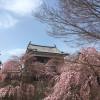 【散策レポート】話題のNHK大河ドラマ「真田丸」と上田城千本桜
